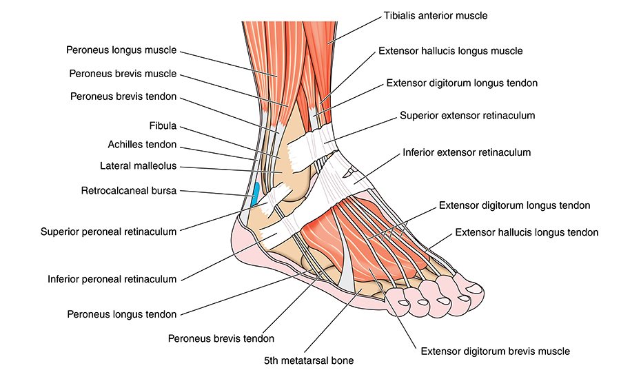 leziunile articulației gleznei și tratamentul acestora