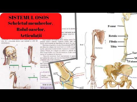 dureri de spate ale articulației șoldului