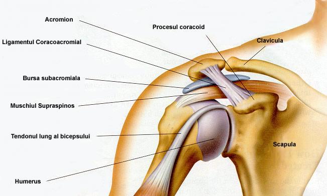 articulațiile umărului rănesc după apăsarea bancului
