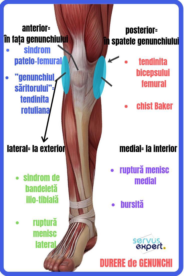 dureri osoase în articulația genunchiului