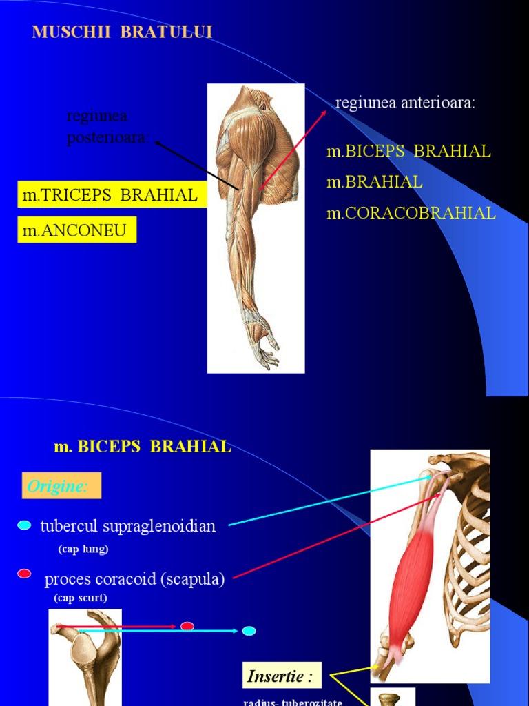 umflarea pe articulația brațului denivelările rănesc articulațiile