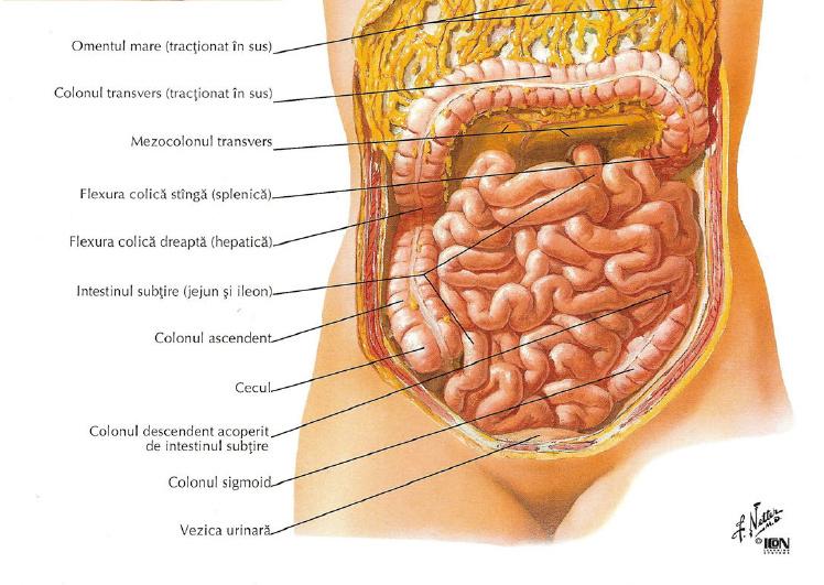 dureri de sold la nivelul intestinului