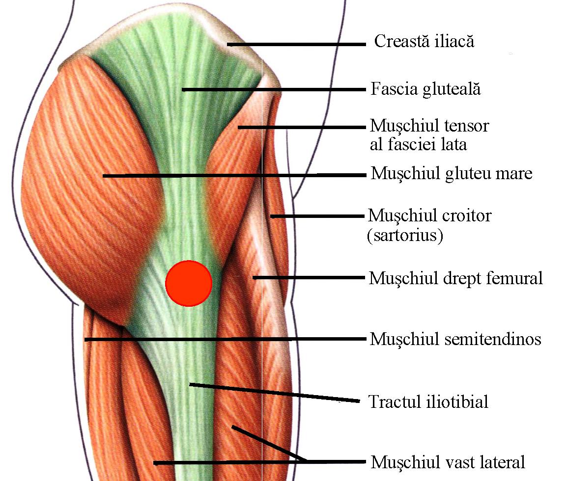 artroza deformantă a stadiului inițial al articulației șoldului