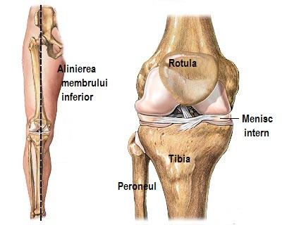 inflamația genunchiului cartilajului inflamația genunchiului după exercițiu
