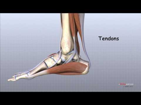 articulațiile de pe picioare sunt inflamate decât tratate artrita distructivă a articulației gleznei