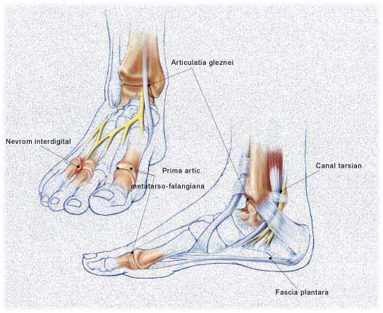 durere de flexie în articulația gleznei tratamentul deformării artrozei cu medicamente