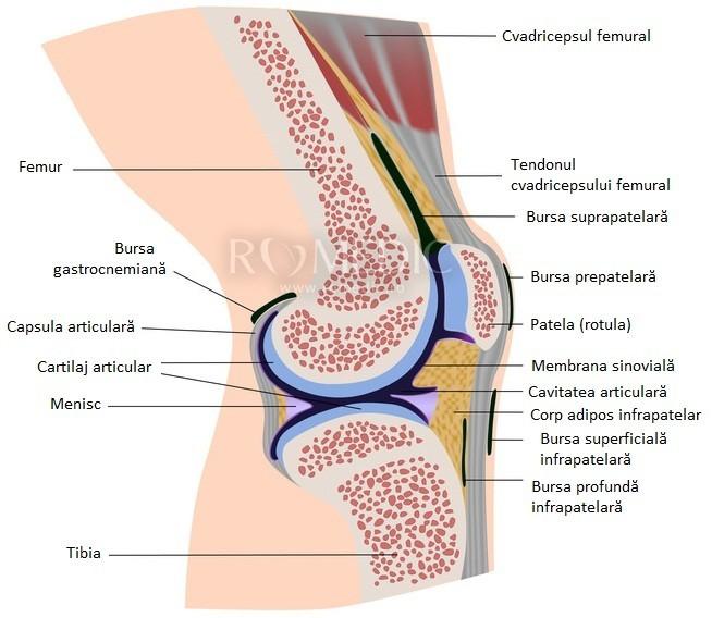 durere ascuțită în articulația genunchiului drept
