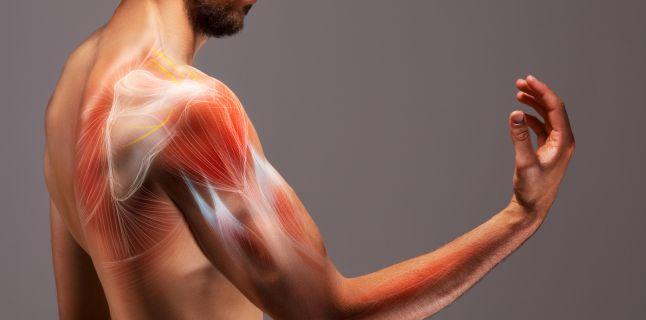 dureri articulare și oboseală musculară