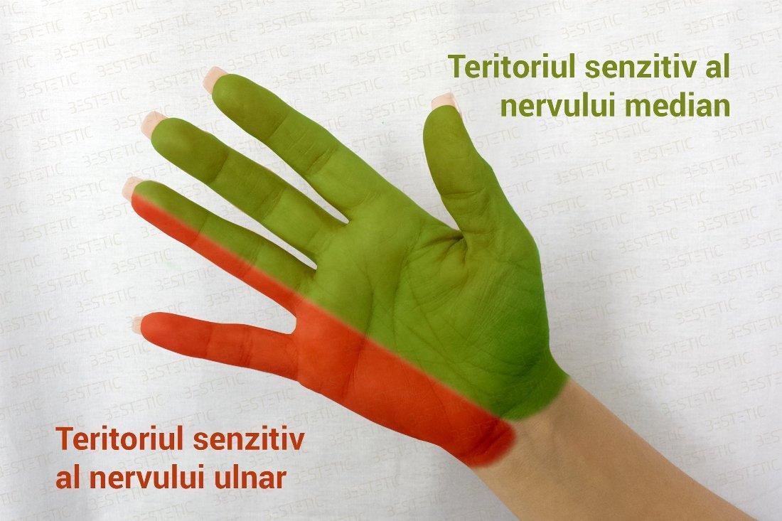 dureri de umăr amorteala degetelor