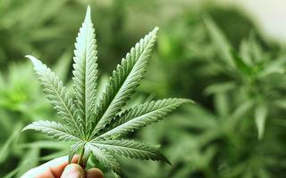 tratament comun cu marijuana Simptome de inflamație la nivelul șoldului