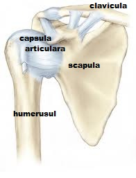 durere acută în articulația brațului Medicamente HEL pentru durerile articulare