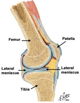 artroza articulației umărului. din inflamația articulațiilor mâinilor