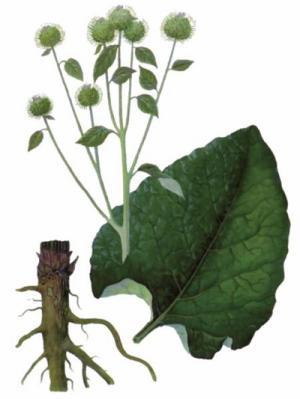 plante medicinale în tratamentul artrozei artrite unguent 999 tratament articular