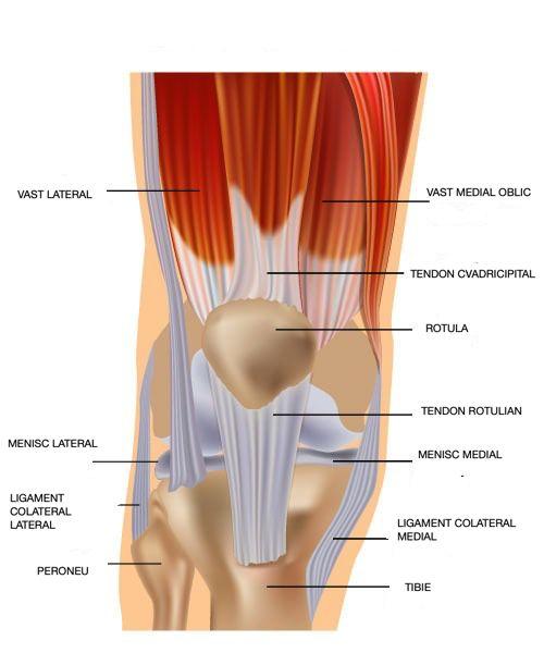 Simptomele de afectare a tendoanelor genunchiului tratamentul cremei cu gel comun