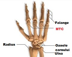 durere 2 falangă 2 articulație deget