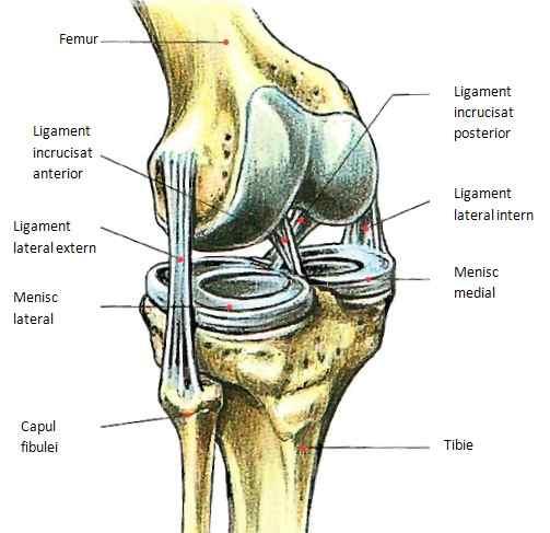 durere din exteriorul genunchiului