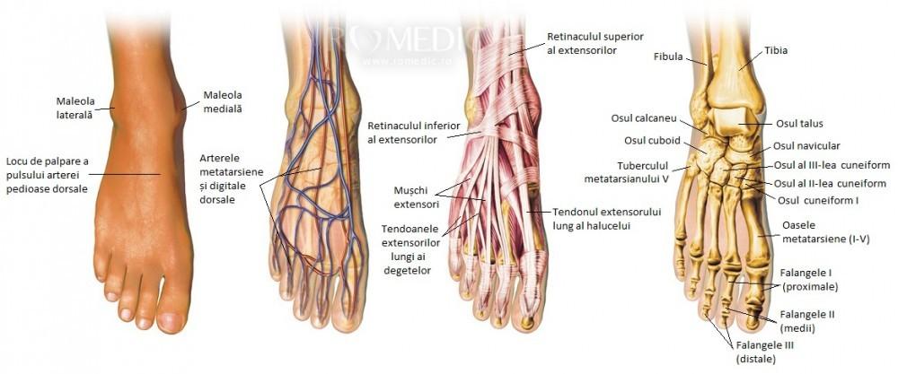 inflamația sacului sinovial al genunchiului