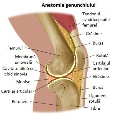 distrugerea cartilajului și a țesutului conjunctiv articulațiile pe brațe și picioare doare