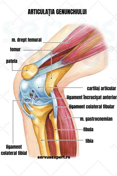 fractură a durerii gâtului femural în articulația genunchiului